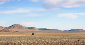 Lonely  tree in the middle of nowhere stock photography
