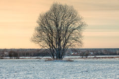 Lonely tree in middle of snowed field Stock Photo
