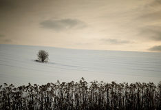 Lonely tree in the middle of snowy field. Stock Photos