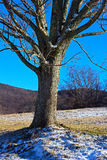 Lonely tree in the middle of snowy fields. A large tree covered in snow dust on the West Virginia countryside Royalty Free Stock Photos