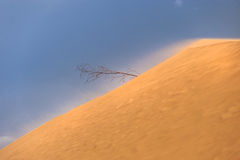 Lonely tree in the middle of a desert Royalty Free Stock Images