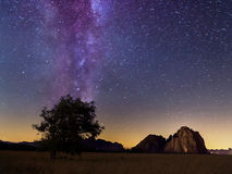 Lonely tree and milky way in summer Stock Images