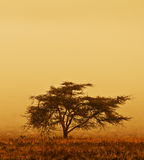 Lonely tree in the mist Stock Photo