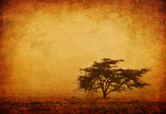 Lonely tree in the mist stock photography