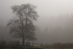Lonely tree in mist Royalty Free Stock Photos