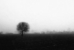 Lonely tree in the mist. Loneliness. Pollution, mist Stock Photos