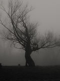 Lonely tree on misty autumn day in spooky haunted forest Royalty Free Stock Photo