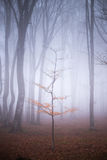 Lonely tree in misty forest. Dark scary forest like a fairy tale Stock Image