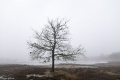 tree outside Royalty Free Stock Photo