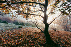 Lonely tree in misty sunset light. Gloomy dark autumn day. Filtered image Stock Photography