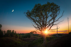 Lonely Tree with Moon at Sunset Stock Photo