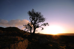 A lonely tree on the moor Stock Photography