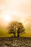 Lonely tree in morning Royalty Free Stock Image