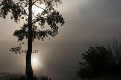 Lonely Tree in the Morning Mist. Lonely tree by the river in the autumn dawn dense fog Stock Image