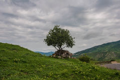 Lonely tree on mount Jvari Royalty Free Stock Images