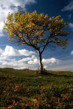 Lonely tree in mountain Royalty Free Stock Photos