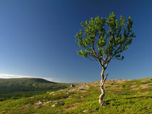 Lonely tree on mountain Royalty Free Stock Images