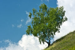 Lonely Tree on Mountain Stock Image