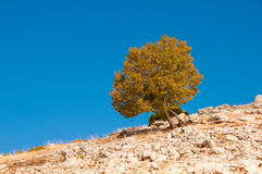 Lonely tree on the mountain Stock Images
