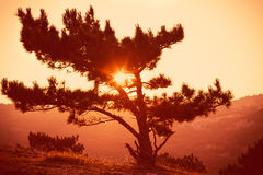 Lonely Tree on Mountain Beautiful Sunset Stock Photos