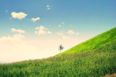 Lonely tree in mountain, Composition of nature. Copyspace For Text Stock Photo