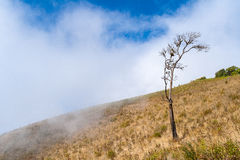 Lonely tree on the mountain at Kew mae pan nature trail Royalty Free Stock Images