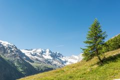 Lonely tree on a mountain meadow. Royalty Free Stock Image