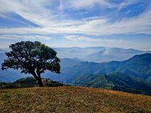 The lonely tree on the mountain peak royalty free stock photos