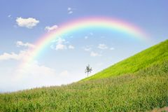 Lonely tree in mountain with rainbow, Composition of nature. Copyspace For Text Royalty Free Stock Image
