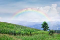 Lonely tree in mountain with rainbow, Composition of nature. Copyspace For Text Royalty Free Stock Photography