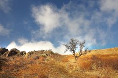 Lonely tree on a mountain slope in a bright autumn grass Stock Images