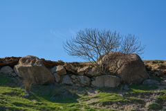 Lonely tree on a mountain slope, rocks and fragments of stones Stock Photo
