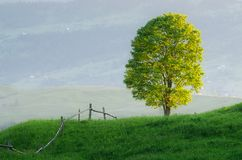 Lonely tree in a mountain village Royalty Free Stock Photography
