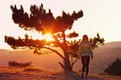 Lonely Tree on Mountain and Woman walking alone to Sunset behind view Royalty Free Stock Images