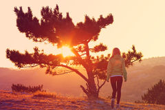 Lonely Tree on Mountain and Woman walking alone to Sunset Stock Photos