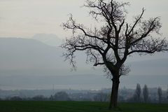 Lonely tree. And mountains on the background Stock Photo
