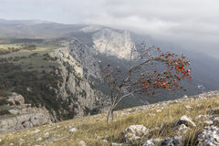 Lonely tree in the mountains with bright red berries. Lonely autumn tree in the mountains with bright red berries Royalty Free Stock Image