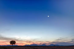 Lonely tree with mountains at dusk, Germany Royalty Free Stock Photos