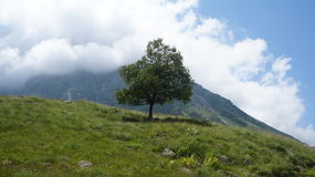 Lonely tree in mountains royalty free stock photo