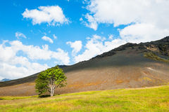 Lonely tree in the mountains. Stock Photo