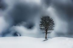 Lonely tree in mountains of Switzerland Stock Photography
