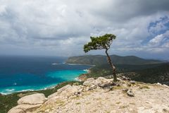 Lonely tree on the mountainside. Small Lonely tree on the mountainside stock photo