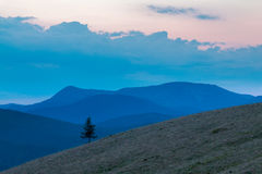Lonely tree on the mountainside Stock Photo