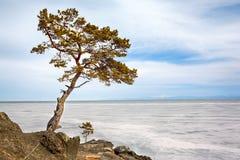 Lonely tree near Baikal lake Stock Image