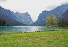 Lonely tree near the mountain lake. In a cloudy day Stock Photo