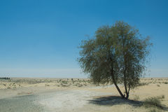 Lonely tree near the road in the desert Stock Photography