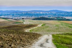 Lonely tree in a Tuscan valey. Lonely tree near a rural road in a Tuscan valey royalty free stock photography