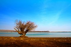 Lonely tree near water Royalty Free Stock Images