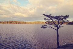 Lonely tree near water Royalty Free Stock Photo
