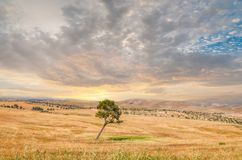 Lonely tree, Negev Desert Royalty Free Stock Photography